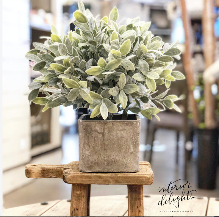 Sage in Cement Pot - Interior Delights Parker