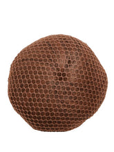 Load image into Gallery viewer, Bunheads hair net bun cover - Blonde/Brown/Black - Strictly Dancing