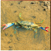 Tidal Pool Blue Crab Square Piece-Mill Wood Art
