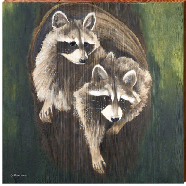 Raccoon Duo