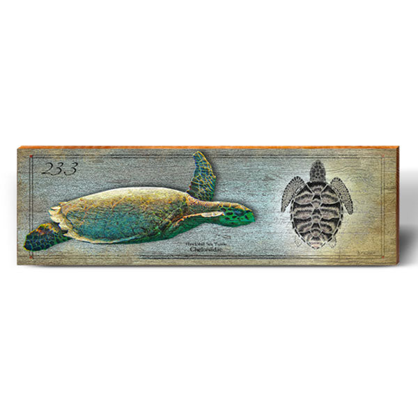 Hawksbill Sea Turtle Study-Mill Wood Art