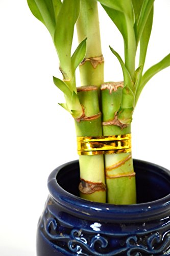 Living Room Live 3 Style Party Set Of 4 Bamboo Plant Arrangement W