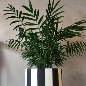 Find Perfect Plant for Your Home