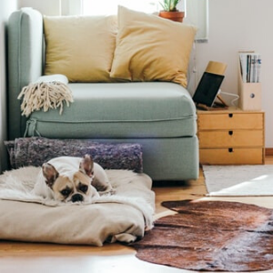 If You Have Pets, We Have Home Decoration Suggestions For You!