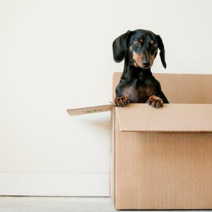 Tips for Packing Items While Moving Out