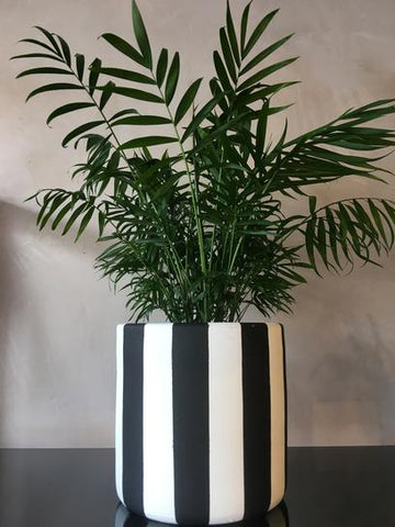 Plant Pot - Black and White