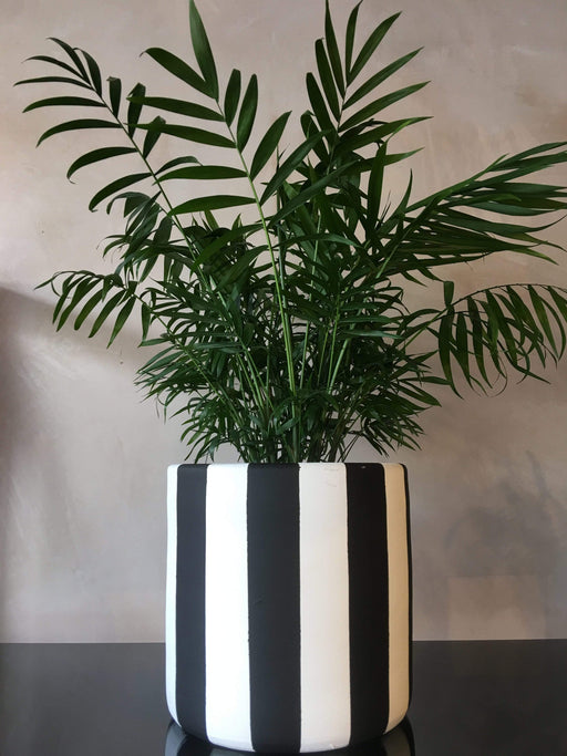 Atmacha - Home and Living Accessories Plant Pot - Black and White