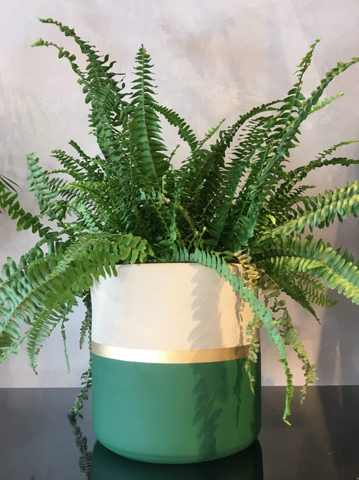 Atmacha - Home and Living Accessories Plant Pot - Green, Cream and Gold