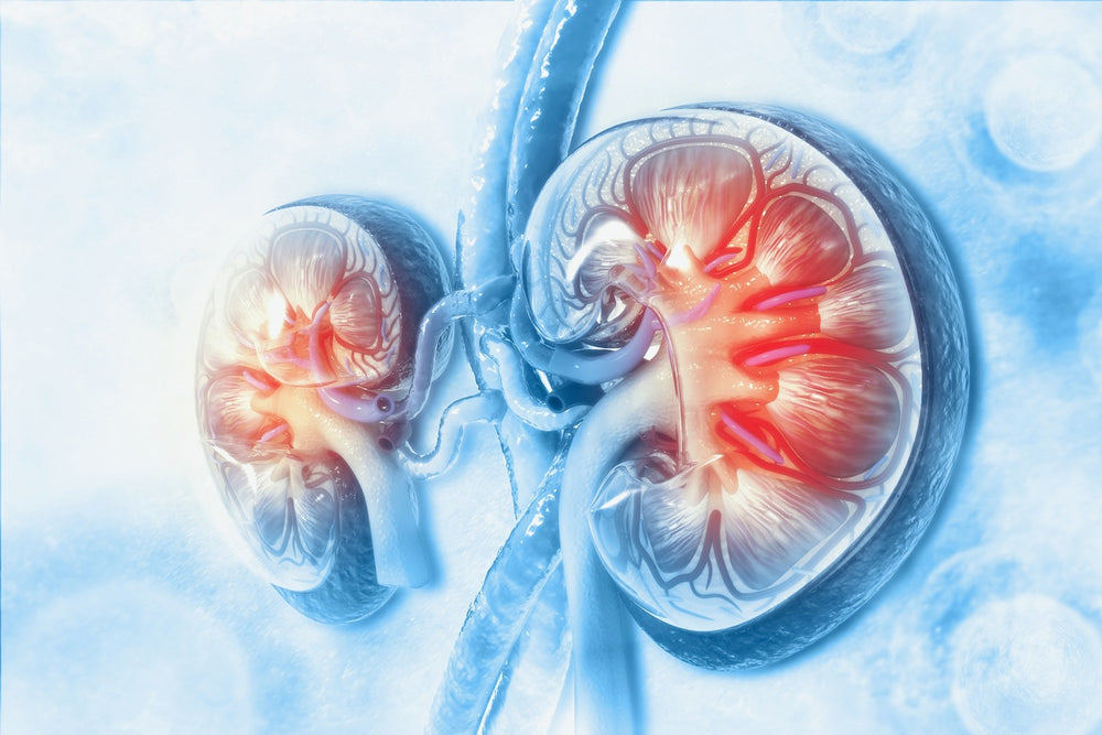 Reviewing the Updated Renal Guidelines | 1 CPEU