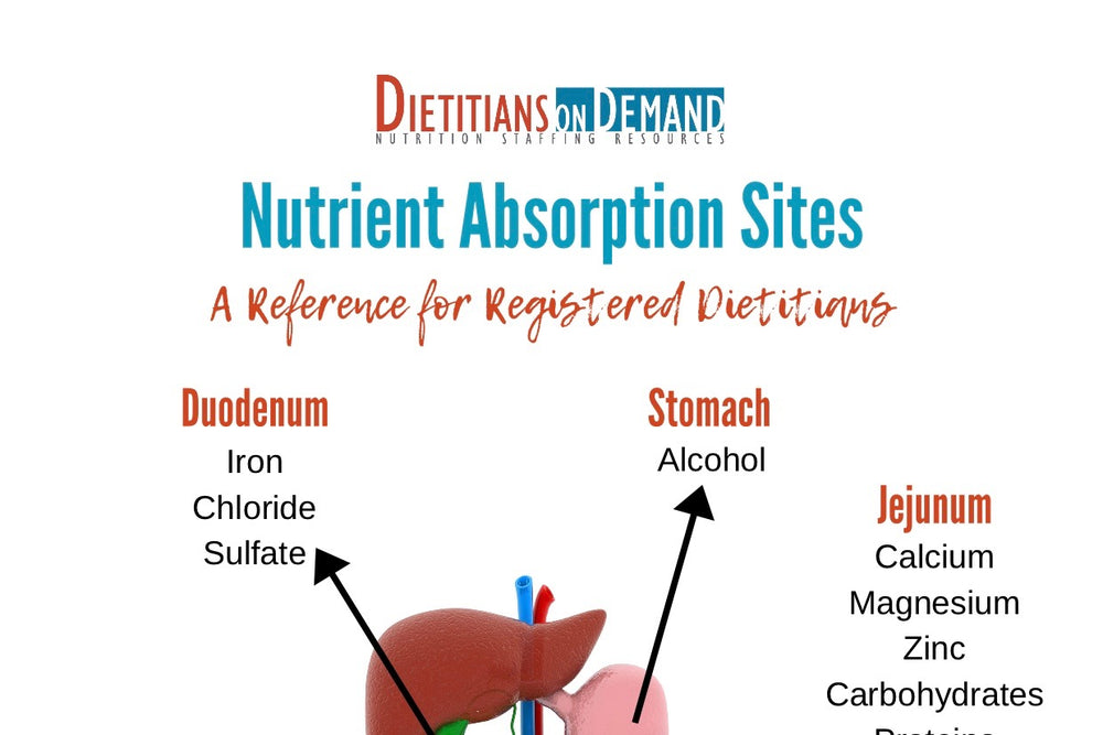Nutrient Absorption Sites | Infographic