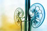 Renal Diet Restrictions: What, When, and Why | 1 CPEU