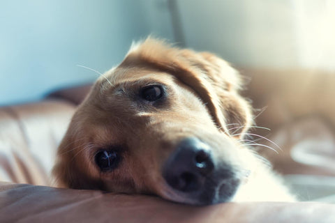 Signs of dog anxiety