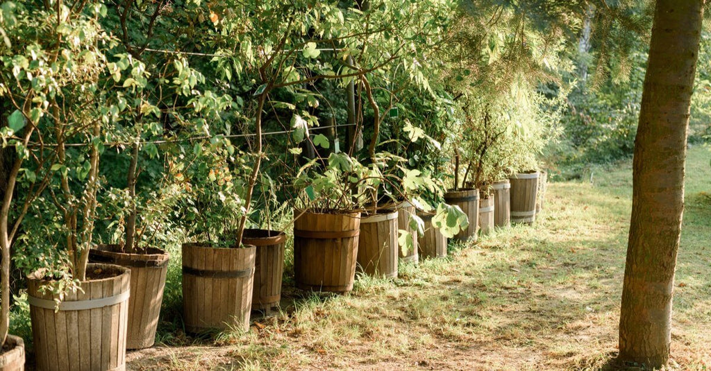 Decorate Your Outdoor Space Attractively with Barrels