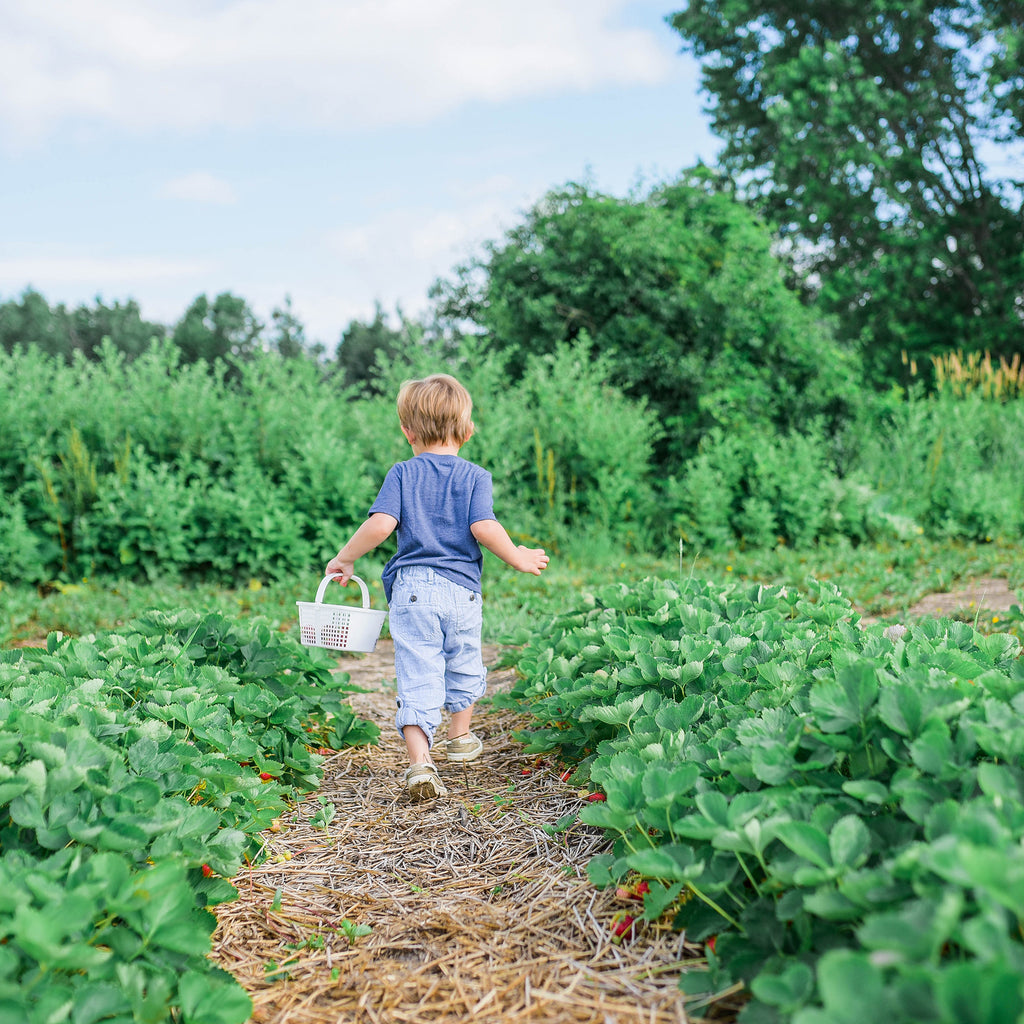 5 Best Vegetables for Kids to Grow in the Garden