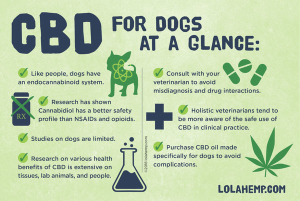 CBD Oil for Dogs with Cancer: Is There Any Science to Back