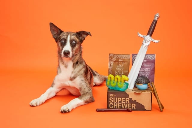 What Are The Coolest Dog Products For 2019?