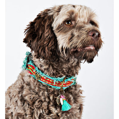 Dog with a Mission Lola Canvas Collar with Rainbow Trim
