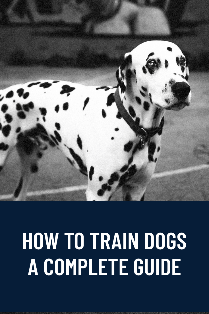 How To Train Dogs - Complete Guide