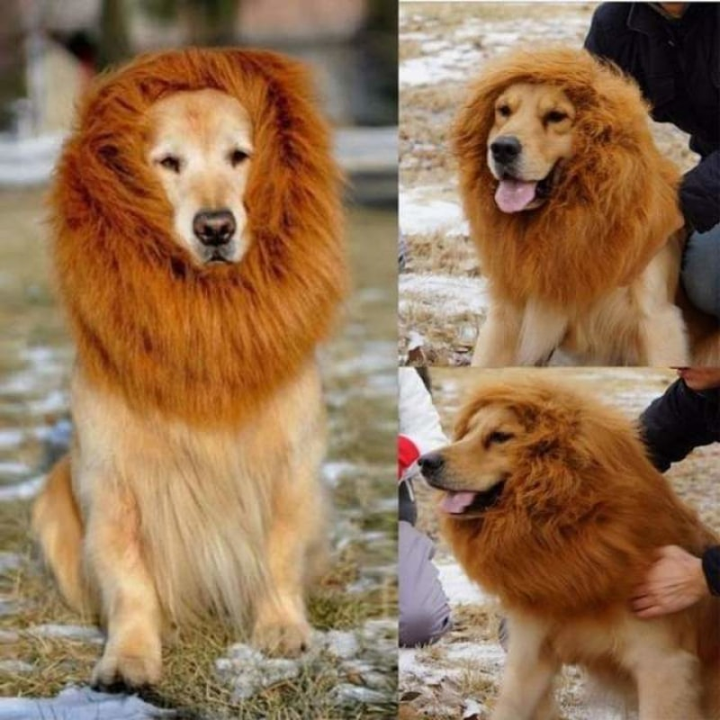 Majestic Dog's Lion Mane Costume - dilutee.com
