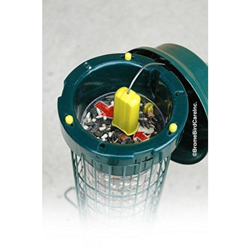 Squirrel Buster Bird Feeder - dilutee.com