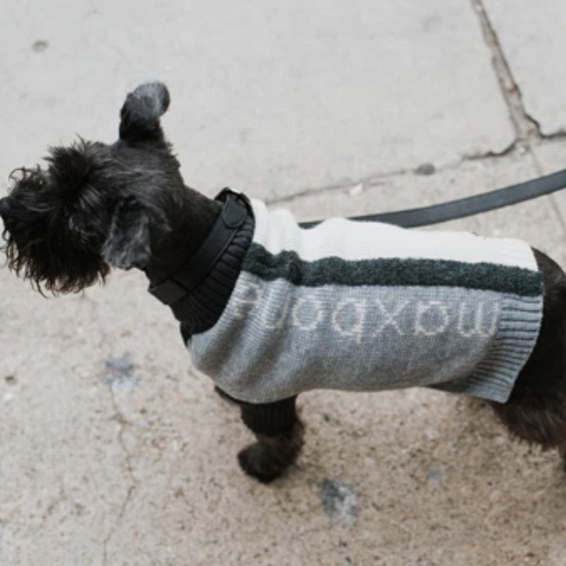 Color-block Dog Jumper
