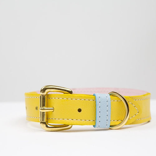 Leather Dog Collar Palm Springs Bound