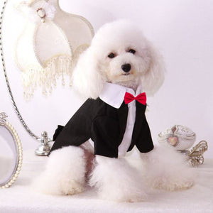 Black Dog Tuxedo with Red Bow Tie - The Uppity Puppy