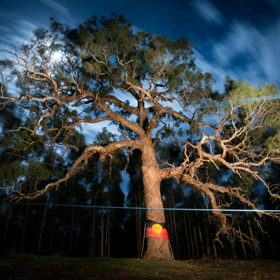 Sacred Tree Felled on Djab Wurrung Country