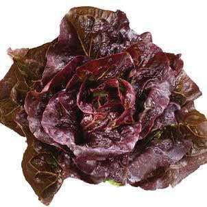 Lettuce - Pomegranate Crunch Lettuce Seed Pack (Lactuca sativa 'Pomegranate Crunch')