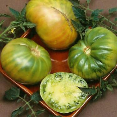 Tomato - Aunt Ruby's German Green Tomato Seed Pack (Solanum lycopersicum 'Aunt Ruby's German Green')