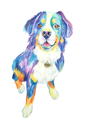 Berenese Mountain dog water color portrait