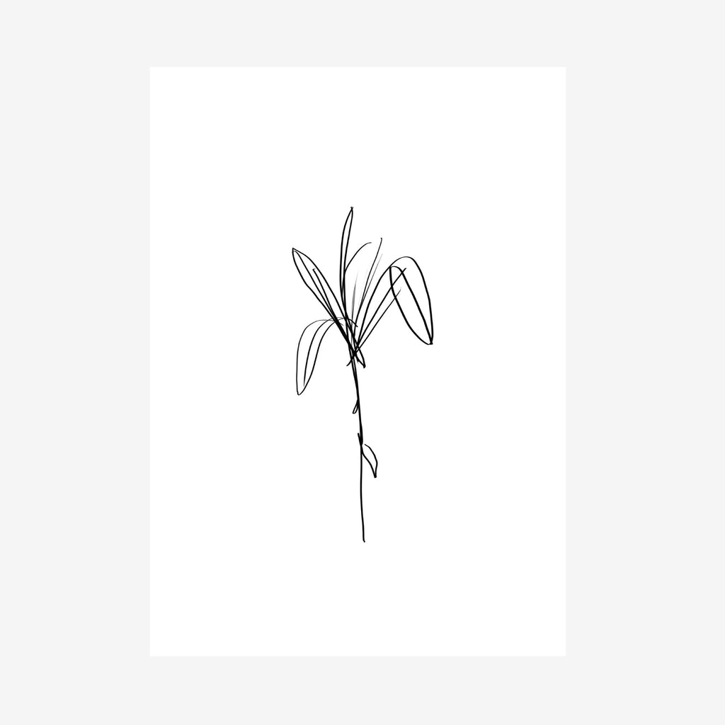 botanical two print