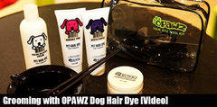 Grooming with OPAWZ Dog Hair Dye [Video]