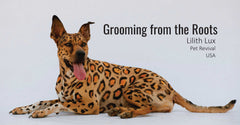 Grooming from the Roots - OPAWZ Creative Pet Grooming Tips & Tricks