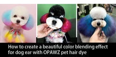 How to create a beautiful color blending effect for dog's ear using OPAWZ pet hair dye