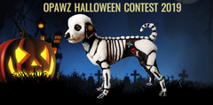 Halloween Dog Grooming Contest 2019 – Best Creative Dog Grooming Ideas from OPAWZ