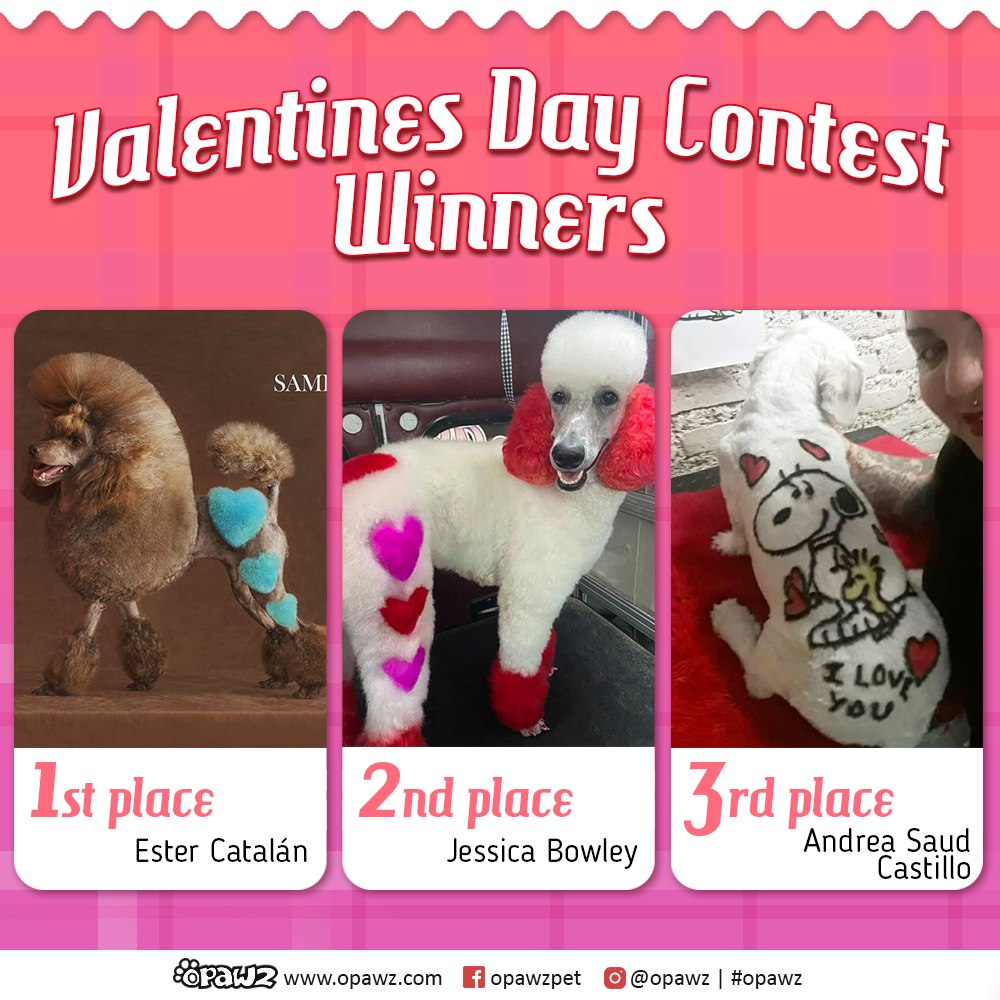 valentine dog grooming contest