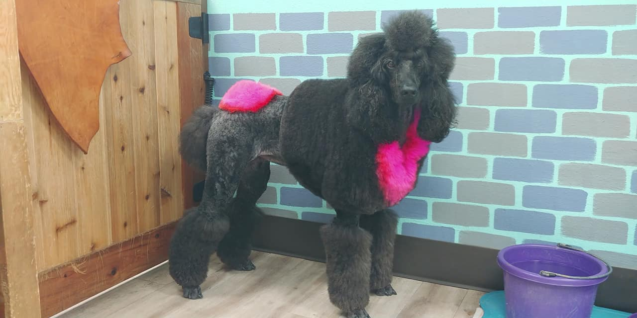 safe pet dye for black dog grooming