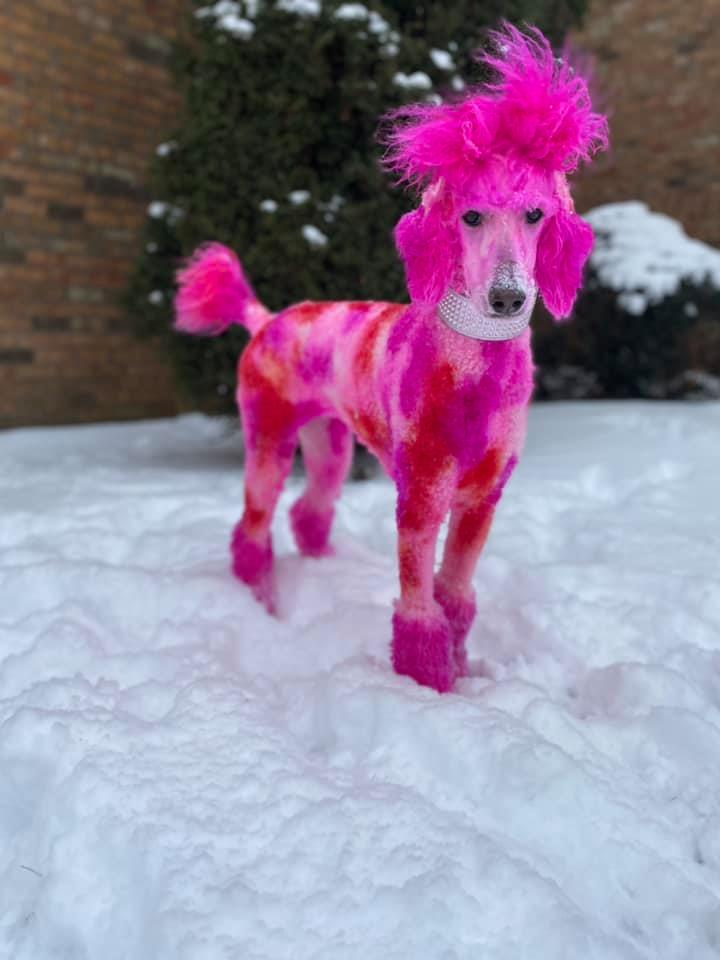 safe pet dye dog grooming