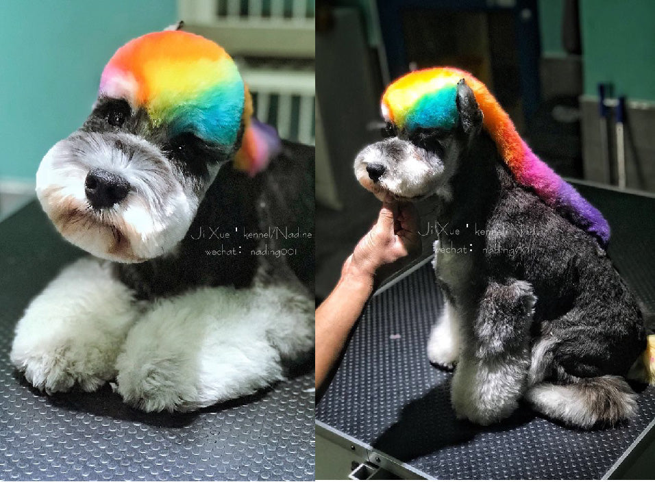 Ji Xue Groomer  with OPAWZ Permanent dyes