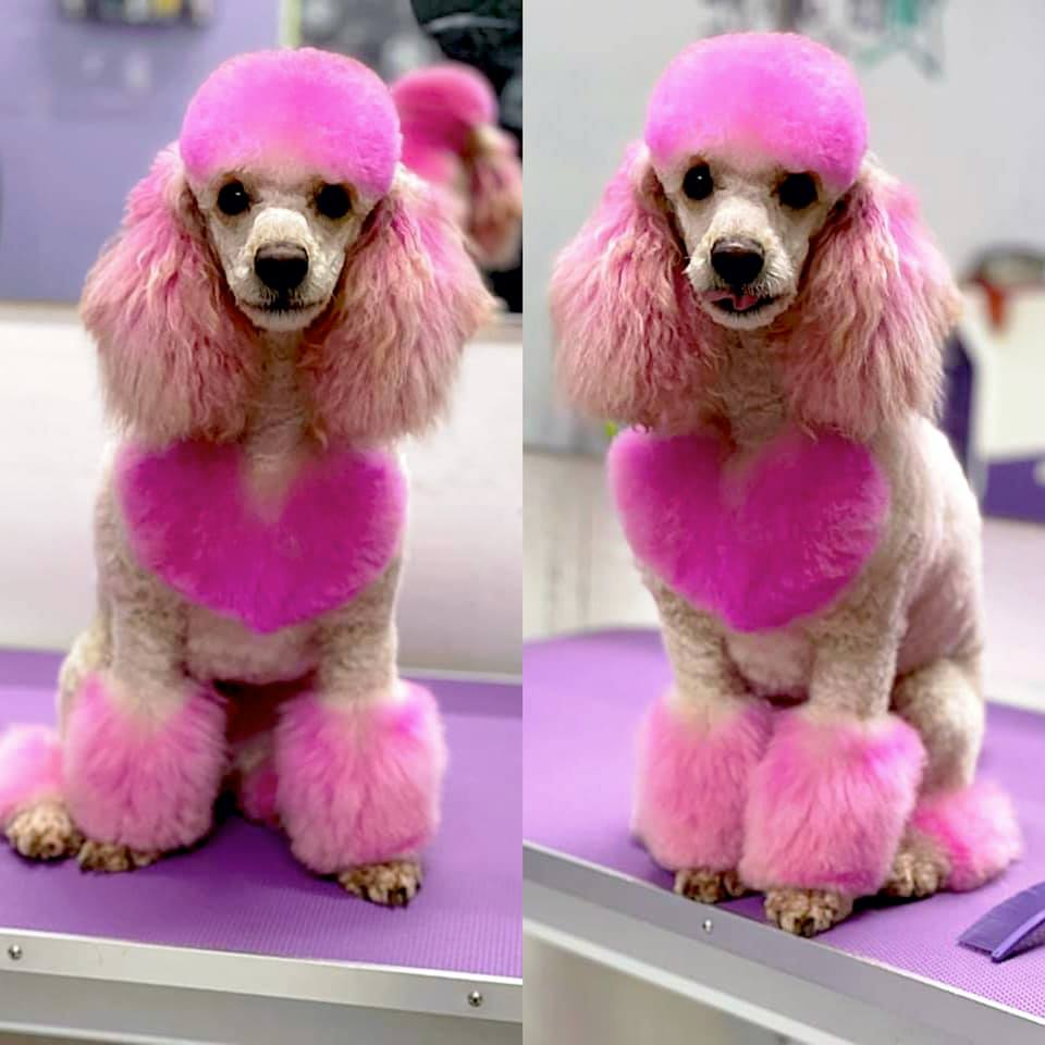 safe dog dye pet grooming