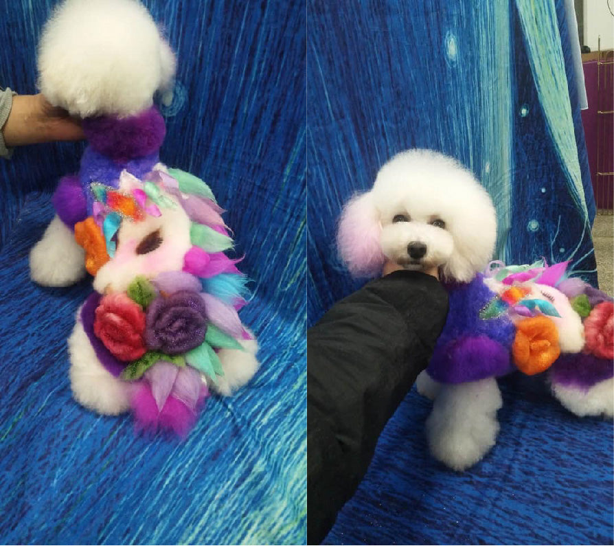 Piao Xue Groomer with OPAWZ Permanent Dyes.