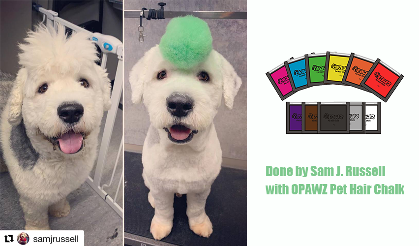 Sam J. Russell with OPAWZ Pet Hair Chalk