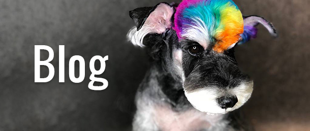 The Creative Professional Choice in Dog Grooming and Fashion