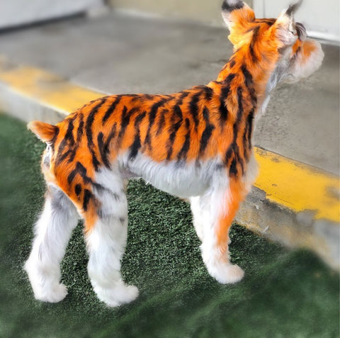tiger stripes creative grooming for dog