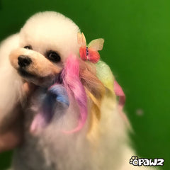 Pet Hair Chalk-Pink (TC01)
