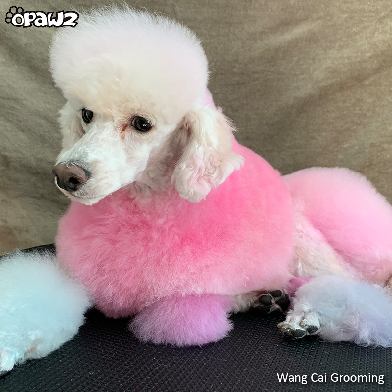 OPAWZ Pet Color Shampoo Fuschia