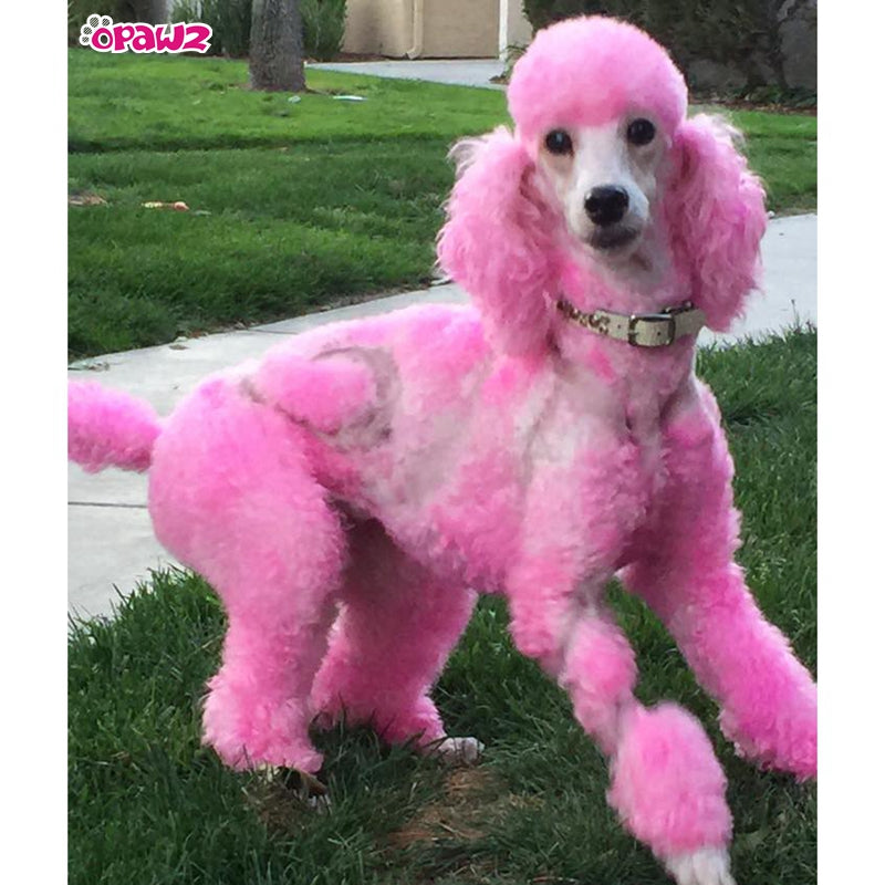 Charm Pink Dog Hair Dye by OPAWZ - Lasts 20 Washes