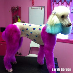 Dog Hair Dye-Adorable Pink (PD03)