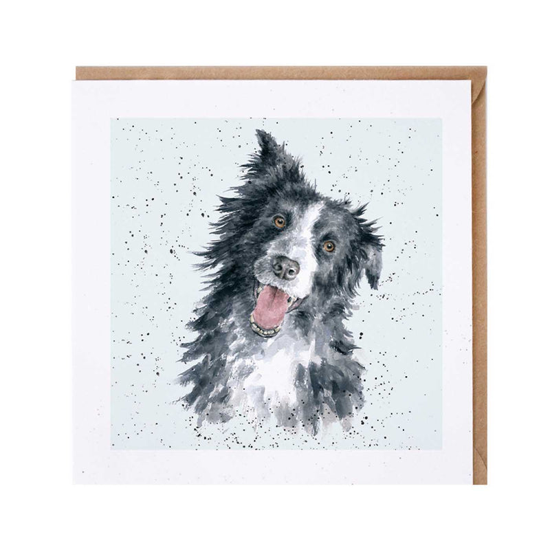 Border Collie Dog Card